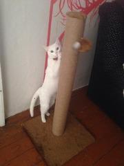 Когтеточка столбик Cat house (срочно)