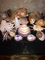 Изготовление,  ремонт аквариумов,  террариумов и стеклоизделий по низким ценам КОПИЯ