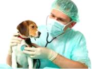 Оптовая ветеринарная аптека Veterinariya.info с доставкой по Украине